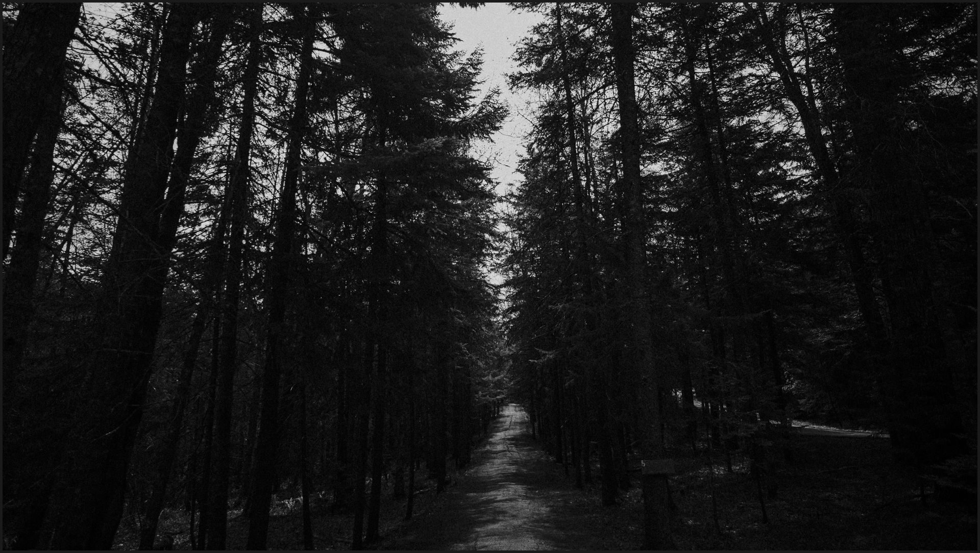 bar harbor, black and white, forest, wood, maine