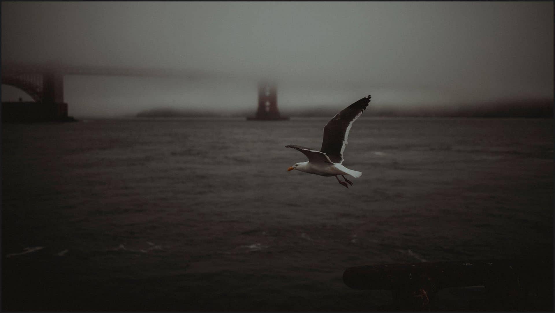 san francisco, california, elopement wedding, ocean, seagull, fog, golden state bridge